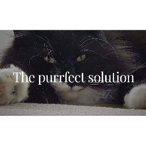 The Purrfect Solution