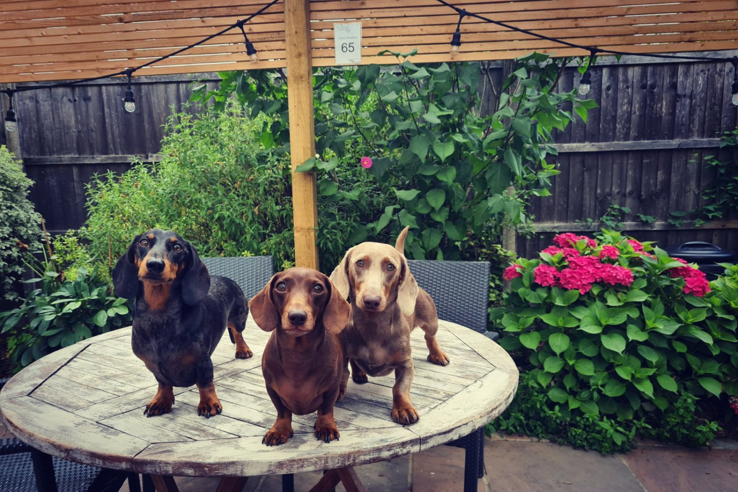 10 PERFECT PUBS IN EPSOM, EWELL AND SURROUNDS YOU CAN PITCH UP TO WITH YOUR POOCH…